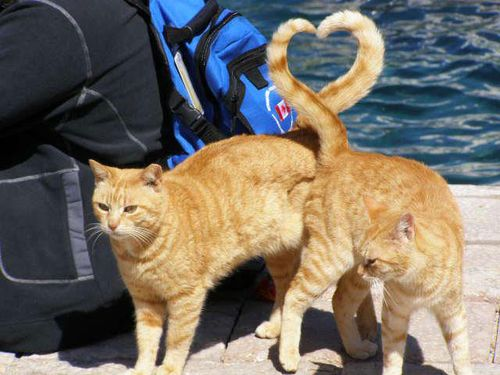 9-Cats-Heart-Tail