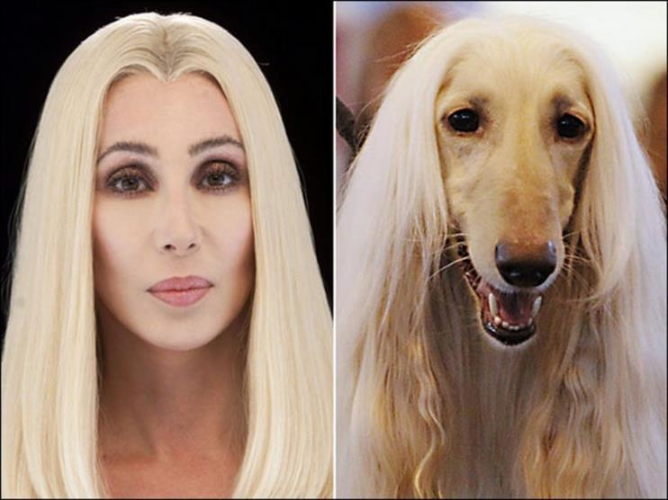 5-Cher-Blonde-Dog (Copy)