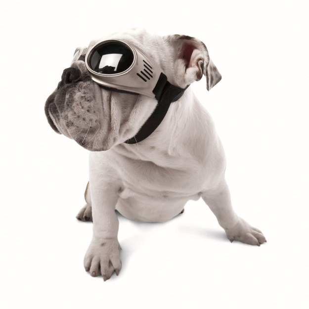 10. Does your dog love sticking her head out the window Protect her eyes with a pair of Doggles.1